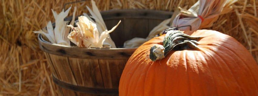 Halloween Pumpken